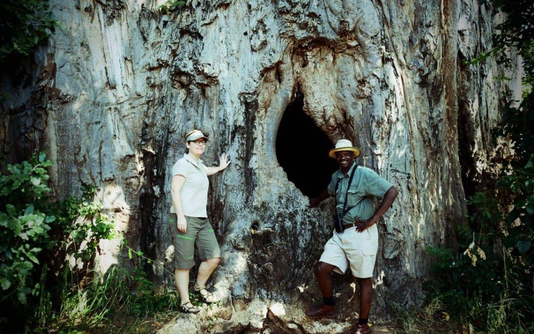 Blant eldgamle baobabtrær og elefanter som ikke har glemt